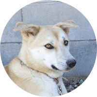 愛犬 チビの写真