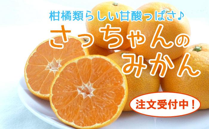 柑橘類らしい甘酸っぱいみかん さっちゃんのみかん